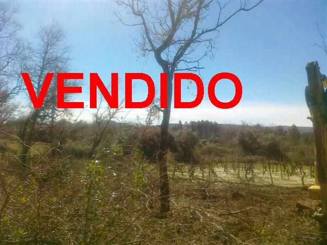 Central Portugal Land for Construction Avelar. Property for sale Central Portugal Harea Real Estate. Find Unique Properties in Portugal. Ruin land for sale.