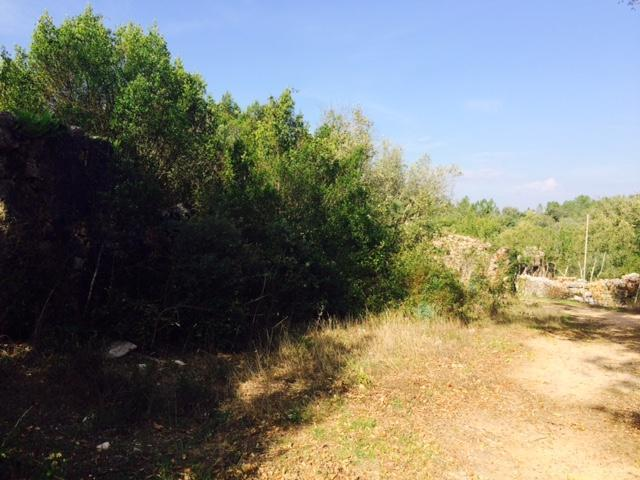 Piece of land and for sale near Ansiao
