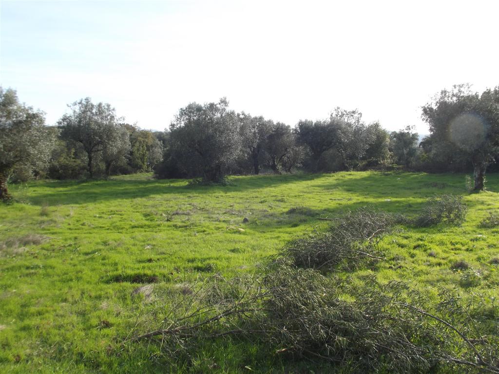 Terreno para Construção perto de Avelar Zona Centro